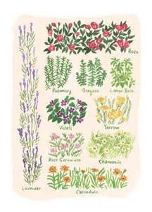 Garden Of Quarterly Wilder Quarterly Reena Goren Illustration