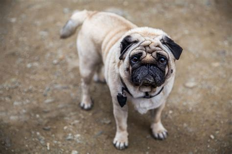 pug before 26 that you would never see with your own