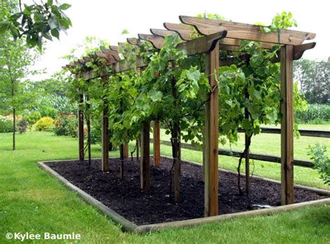 25 unique grape arbor ideas on pergola garden