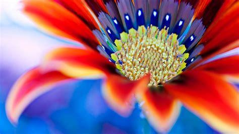 ceggio dei fiori massa finalese fiori colori e profumi in piazza piuweb