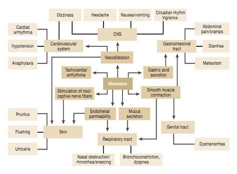 Detox Symtoms Or Histamine Response by Low Histamine Diet Definition Foods Questions Answers