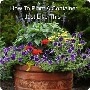 how to make a beautiful mixed container of flowers how to make a small area in your garden look nice and