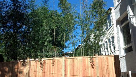 Bamboo Garden Houston by Garden Design With Landscape Picture Backyard Digital