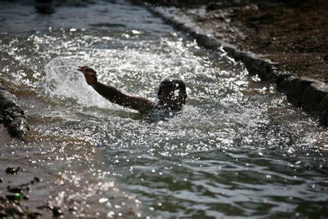 imagenes del rio jordan en la actualidad jeric 243 en fotos