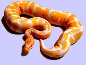 Imagenes De Viboras Extrañas | quot el portal de las serpientes quot lropeltis boas pitones