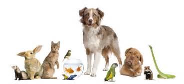 Small Animals Free To Home Anaheim Vet Katella Animal Clinic