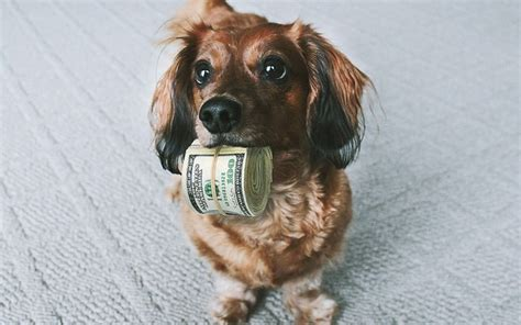 average cost of puppy the costs of ownership a complete breakdown