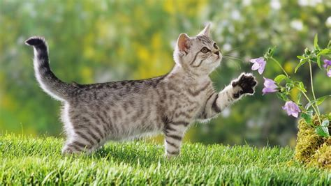 Introduce your cat to the great outdoors animalblog