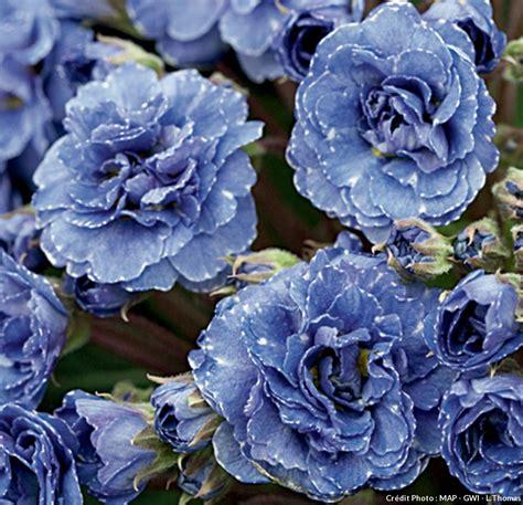 Fleurs Bleues Vivaces by Arbuste Fleurs Bleues Vivaces