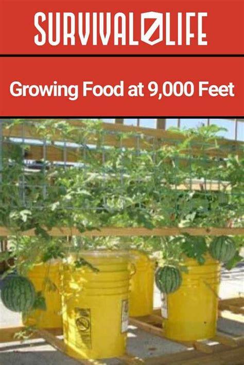 grow food  harsh weather grow