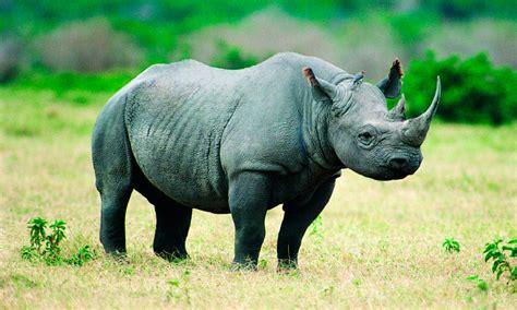 fotos de animales en peligro de extincion imagenes