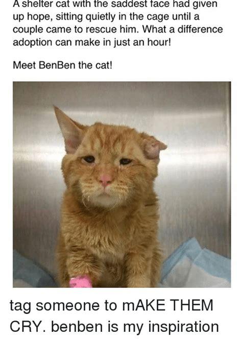 Cat Memes Tumblr - 25 best memes about cat cat memes