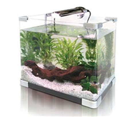 maintaining small aquariums feeding purchase