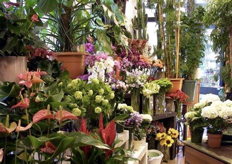 fiori school come arredare un negozio di fiori o piante gt gt cliento school