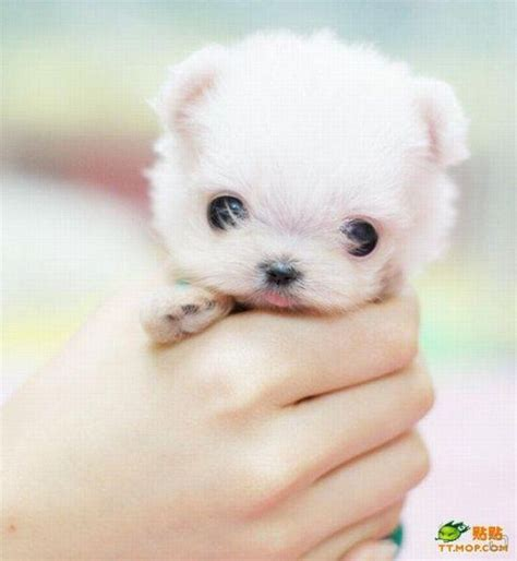 puppies that stay small breeds small hd puppy dogs cats cutest small dogs that stay small small breeds