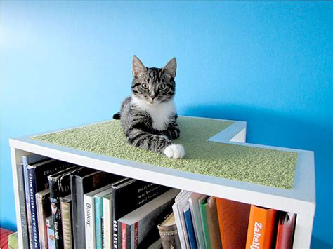 the catcase mixes bookcase cat tree and feline catster