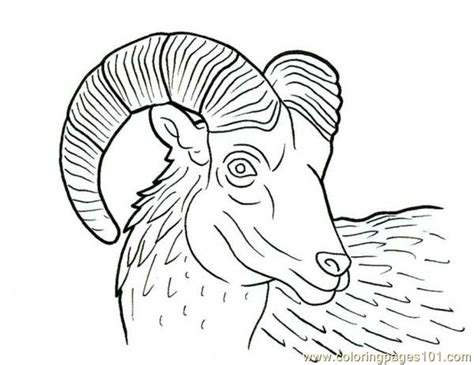 ram coloring page printable free coloring pages of bighorn ram