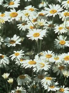 best sun loving plants plants for direct sunlight hgtv