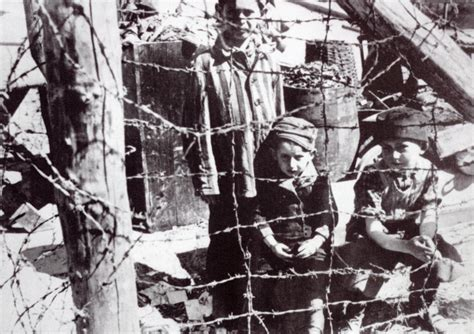 world war ii auschwitz a history from beginning to end books the holocaust