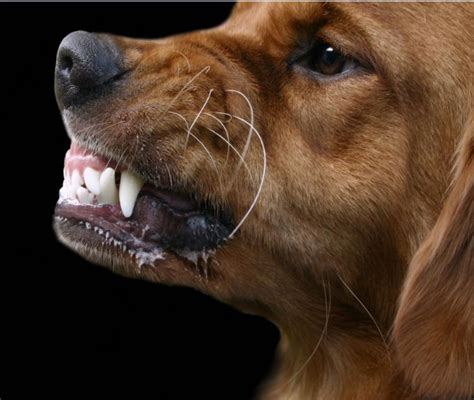 dogs that bite the most all list of different dogs breeds