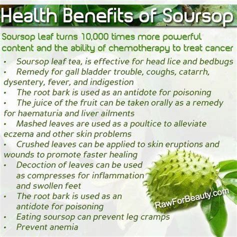 7 Uses For Fruit by 48 Best Images About Soursop Guanabana Fruit On