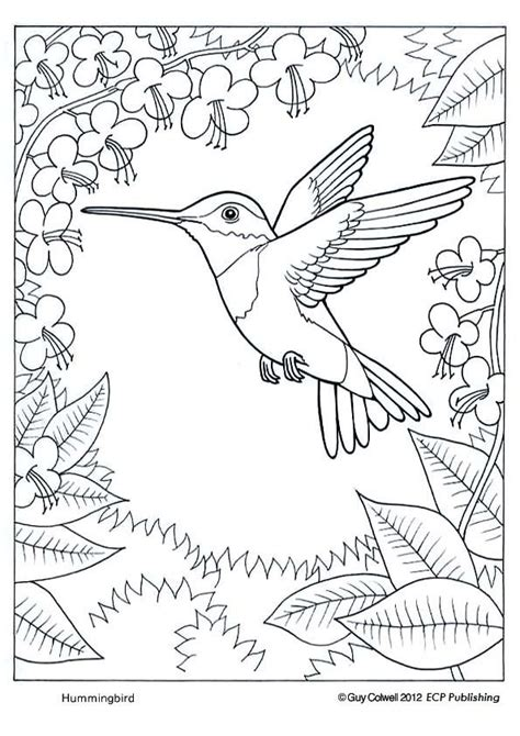 coloring page of birds and insects 124 best birds insects etc coloring pages 2 images on