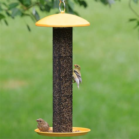 amazon com no no yellow straight sided finch feeder