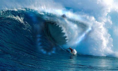 great white shark attack in australia unknown shark bites