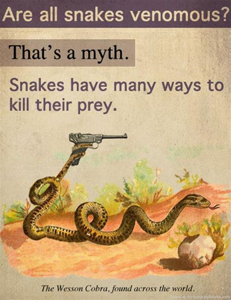 Garter Snake Meme Something You Probably Didn T About Snakes