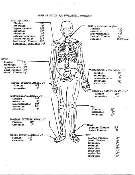 anatomy and physiology coloring workbook chapter 7 page 132 anatomy image organs best 10 anatomy and physiology