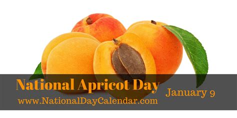 apricots celebrate national apricot day every day with 40 sweet fruity recipes books did you an apricot is loaded with nutrients south