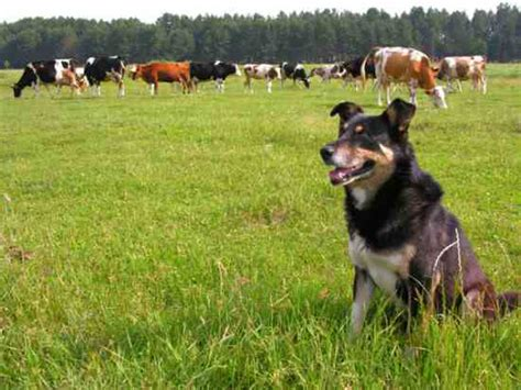puppy farms aid for your farm homesteading and livestock earth news