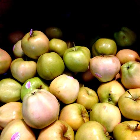 Pcc St Pink pink pearl apples information recipes and facts