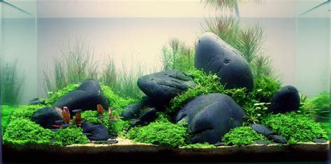 Aquascape Aquarium by Annika Reinke And Aquascaping Aqua Rebell