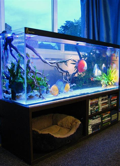 aquarium bed price fish tank bed frame image collections home fixtures decoration ideas