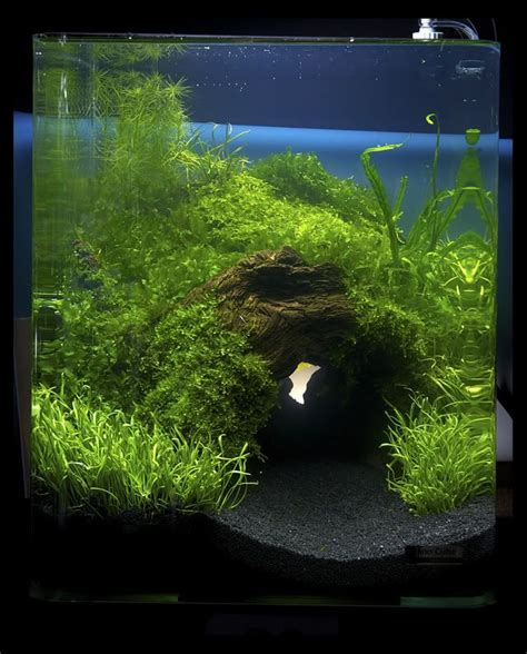 aquascaping layouts 2011 germany quot planted tank of art quot aquatic plants layout