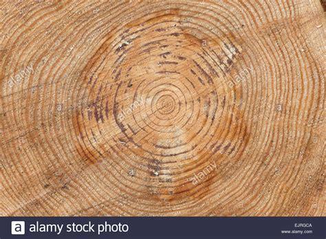 growth pattern en francais pine tree rings sawn tree trunk pattern stock photo