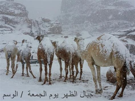 Baret Camel Shabara snow falls in cairo for the time in more than 100