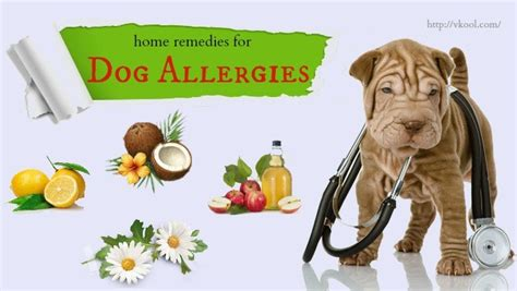 home remedies for allergies top 10 home remedies for allergies
