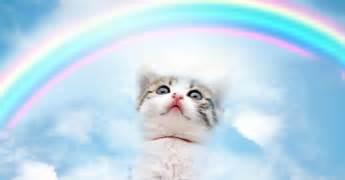 Fur babies at the rainbow bridge pet loss journey pet loss journey
