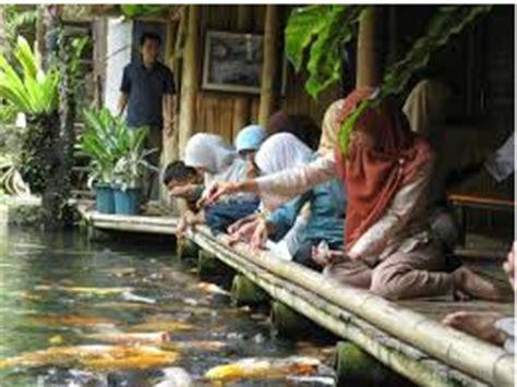 Makanan Ikan Hias Alami Dan Buatan cara memelihara ikan koi dan merawatnya agar sehat serta
