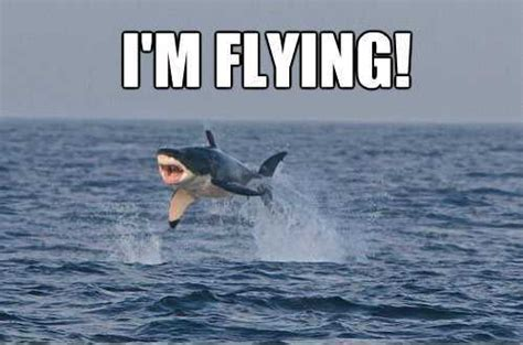 Meme Shark - the 21 funniest shark memes ever gallery worldwideinterweb