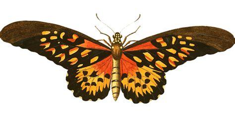 imagenes animales que vuelan animales mariposa que vuelan 183 gr 225 ficos vectoriales gratis