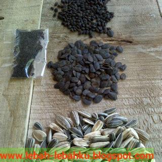 Bibit Kaliandra Jogja jual biji tanaman pakan lebah madu ternak klanceng