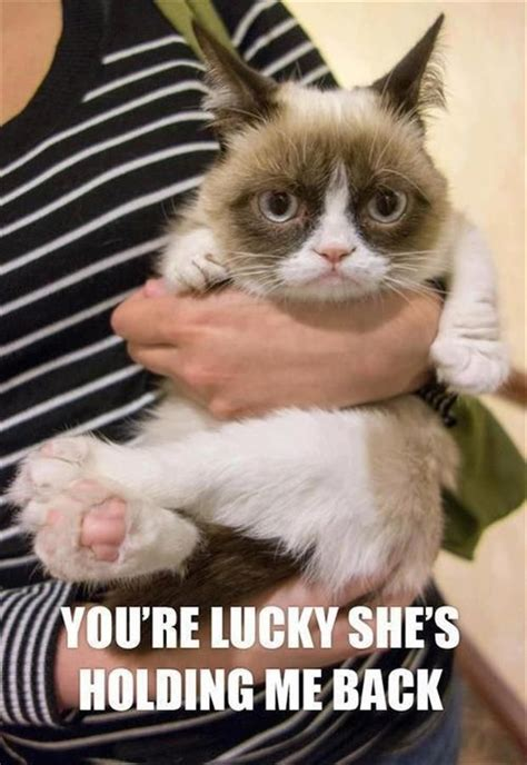 Mean Cat Meme - 157 best images about grumpy cat on pinterest cats