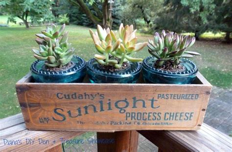 Planters Cheese by Cheese Box Insulators Succulents Projects Cheese
