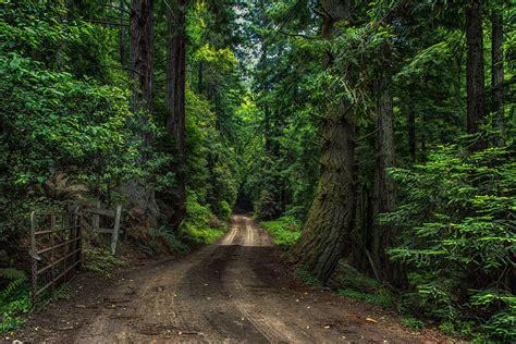 imagenes hd bosques wallpapers hd bosques partes 26 im 225 genes taringa