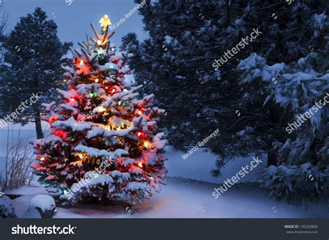 snow covered christmas trees this snow covered tree stands stock photo 145263820