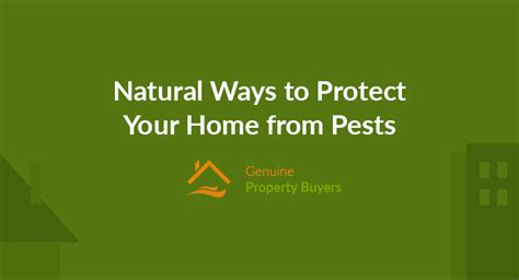 ways to protect your home from pests