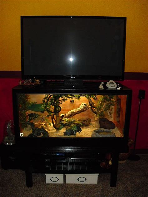 lada terrario how to build enclosures for reptiles custom snake cages